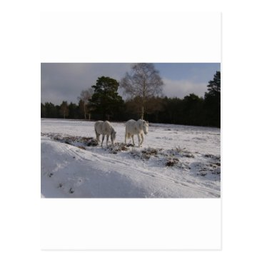 Beach Themed Ponies in the snow postcard