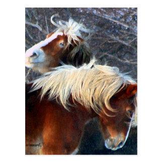 ponies postcard