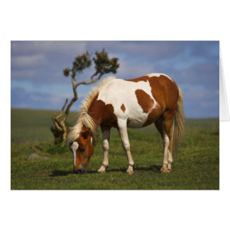 Pony And Lone Gorse Card