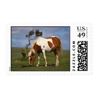 Pony And Lone Gorse Postage