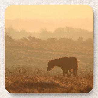 Pony-at-sunrise coaster