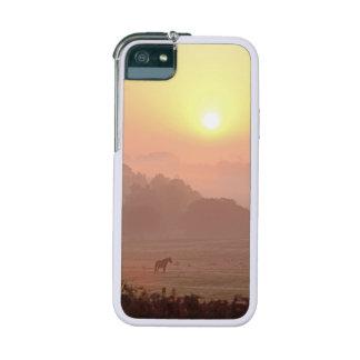 Pony at sunrise Graft iPhone 5 5S case