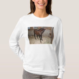 Pony/Horse T-Shirt