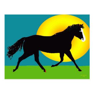 pony in the sun postcard
