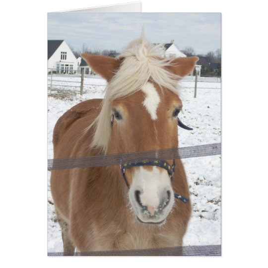 Pony in Winter Card