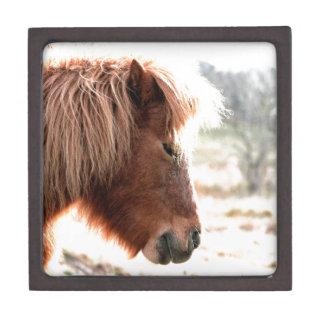 Pony Jewelry Box