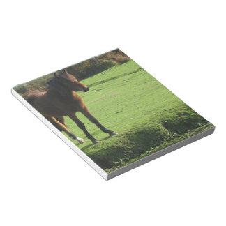 Pony  Notepad