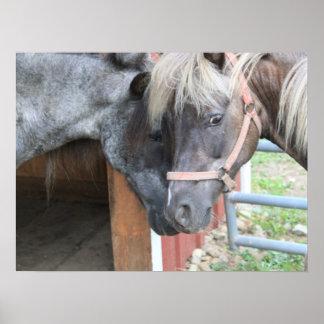 Pony Nuzzle Poster