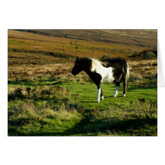 Pony on Dartmoor Greeting Card