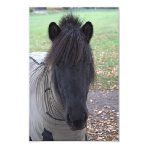 Pony in November