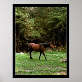 Pony Posters