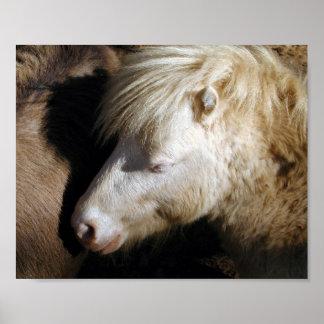 Pony snuggle print