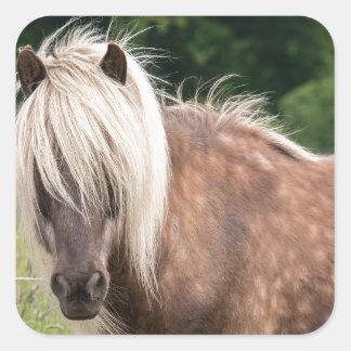 pony square sticker