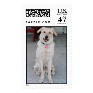 Pooch Postage