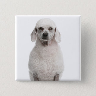 Poodle (1 year old) button