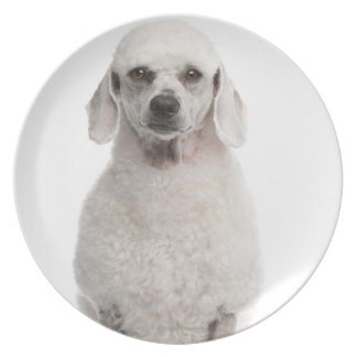 Poodle (1 year old) plate