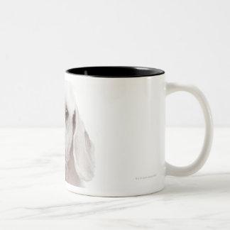 Poodle (1 year old) Two-Tone coffee mug