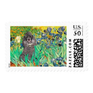 Poodle (8S) - Irises Postage