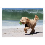 Poodle - Apricot - Poodle Play Stationery Note Card