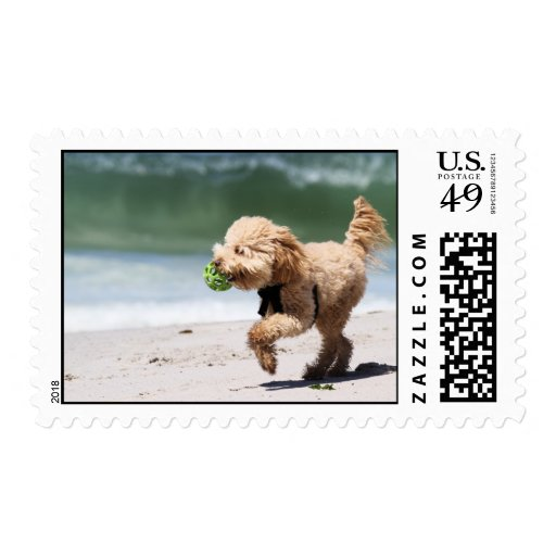 Poodle - Apricot - Poodle Play Postage Stamps
