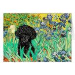Poodle (B3) - Irises Card