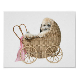 Poodle baby buggy posters