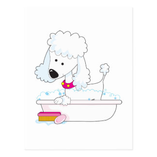 Poodle Bath Postcard