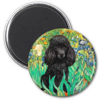 Poodle (black 1) - Irises Magnet