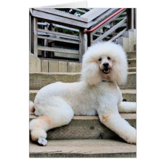 Poodle - Brulee - Trainer Card