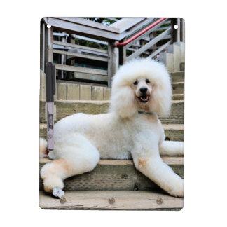 Poodle - Brulee - Trainer Dry Erase Board