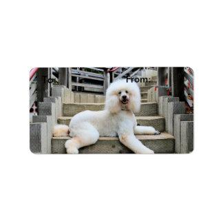 Poodle - Brulee - Trainer Label