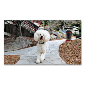 Poodle - Brulee - Trainer Magnetic Business Card