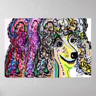 Poodle Color Transition Poster