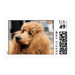 Poodle Day 2010 #19 Postage Stamp