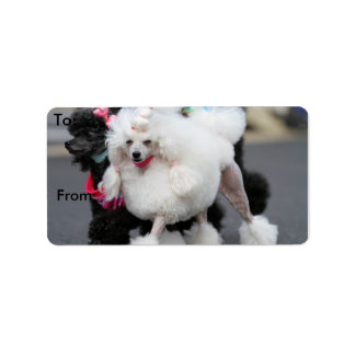 Poodle Day 2010 #6 Personalized Address Labels