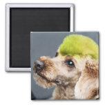 Poodle Day 2010 #7 Fridge Magnet