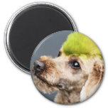 Poodle Day 2010 #7 Magnet