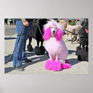Poodle Day 2016 - Barnes - Pink Standard Poodle Poster
