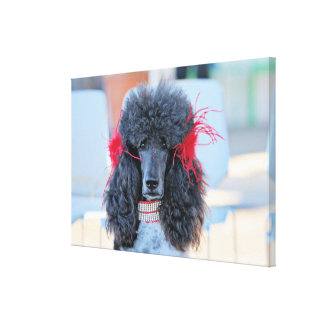 Poodle Day 2016 - Phoebe - Standard Poodle Canvas Print