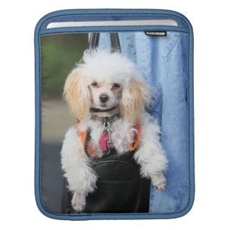 Poodle Day - Hanging Around on a Lazy Day iPad Sleeves