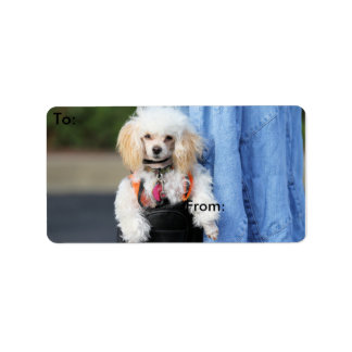 Poodle Day - Hanging Around on a Lazy Day Address Label