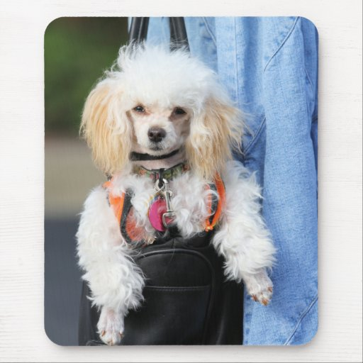 Poodle Day - Hanging Around on a Lazy Day Mouse Pad