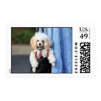 Poodle Day - Hanging Around on a Lazy Day Postage Stamp