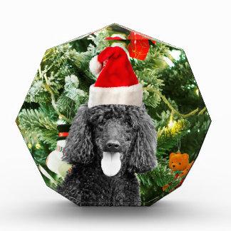 Poodle Dog Christmas Tree Snowman Red Santa Hat Award