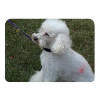 Poodle Dog 5x7 Paper Invitation Card