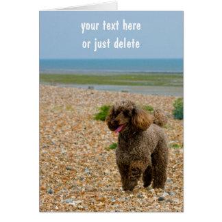 Poodle dog miniature beach custom blank note card