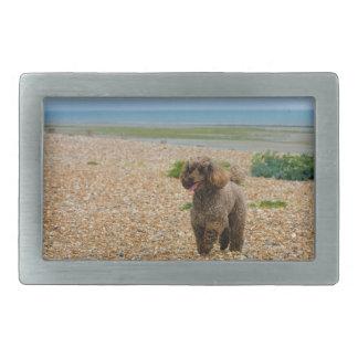 Poodle dog miniature beautiful photo at beach belt buckle