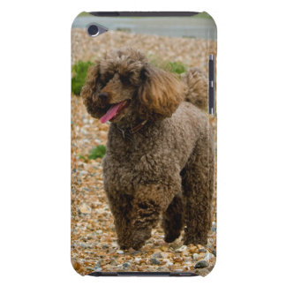 Poodle dog miniature beautiful photo at beach Case-Mate iPod touch case