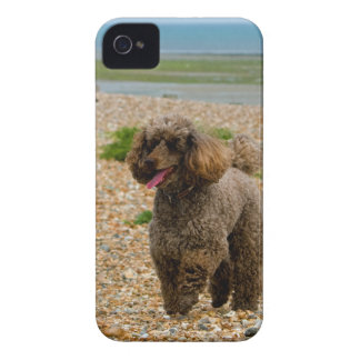 Poodle dog miniature beautiful photo at beach Case-Mate iPhone 4 case