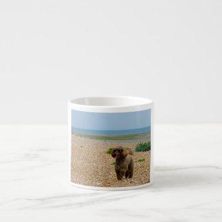 Poodle dog miniature beautiful photo at beach espresso cup